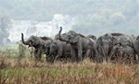 elephants rampage1 Territorial disputes